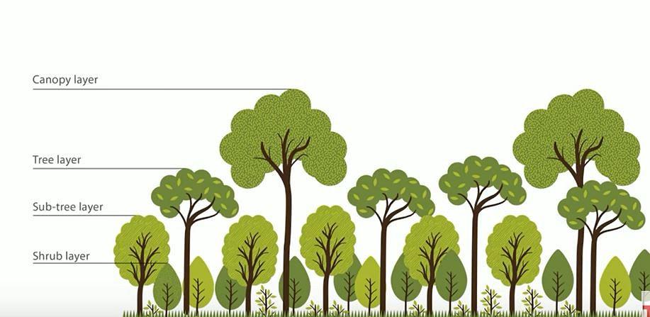 miyawaki forest